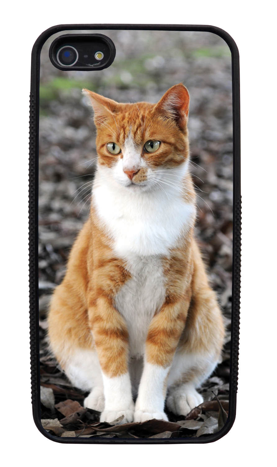 Apple iPhone 5 / 5S Cat Case - Sitting Cat Photo - Cute Pictures - Black Slim Rubber Case