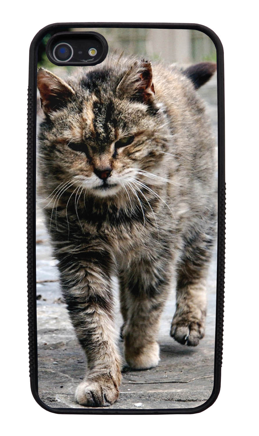 Apple iPhone 5 / 5S Cat Case - Strutting Cat Photo - Cute Pictures - Black Slim Rubber Case