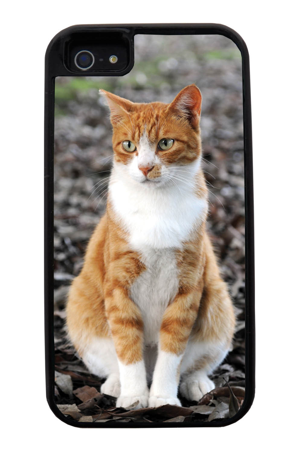 Apple iPhone 5 / 5S Cat Case - Sitting Cat Photo - Cute Pictures - Black Tough Hybrid Case
