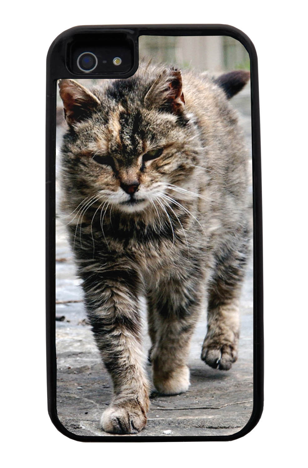 Apple iPhone 5 / 5S Cat Case - Strutting Cat Photo - Cute Pictures - Black Tough Hybrid Case